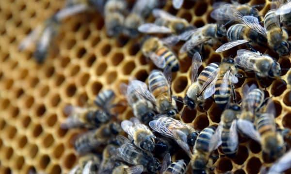 Des abeilles, image d'illustration. - Georges Gobet - AFP