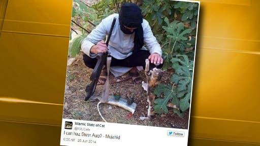 Sur Twitter, les jihadistes s'affichent avec des chats.